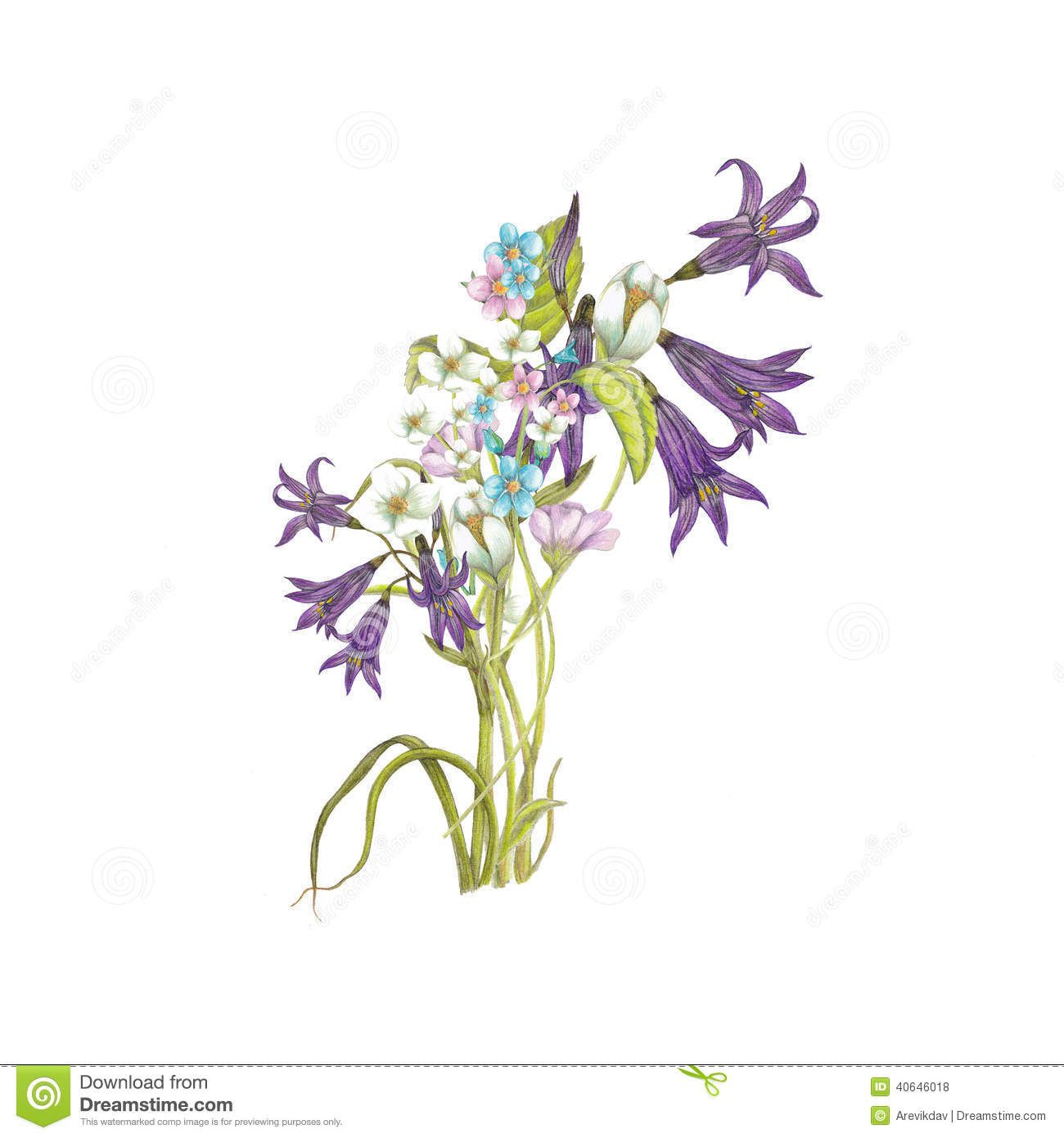 Wildflower bouquet drawing at getdrawings free for personal 1300x1390 bildergebnis fr bouquet of wildflowers stock illustration image izmirmasajfo