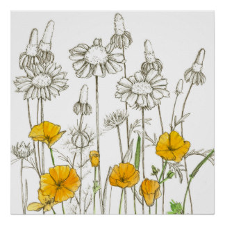 324x324 Wildflower Drawing Art, Posters Amp Framed Artwork Zazzle.co.nz