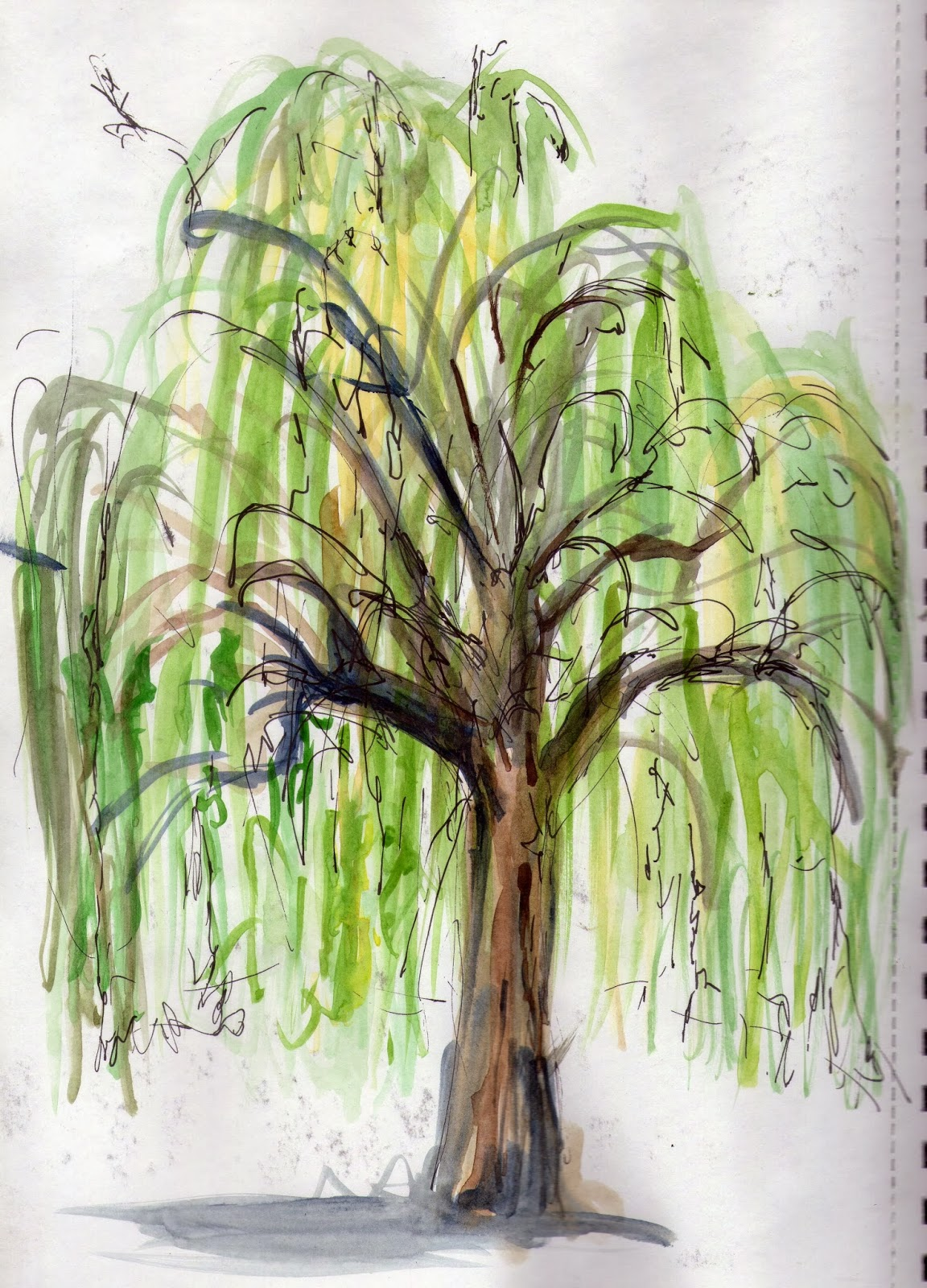 Willow Drawing at GetDrawings.com | Free for personal use Willow ...