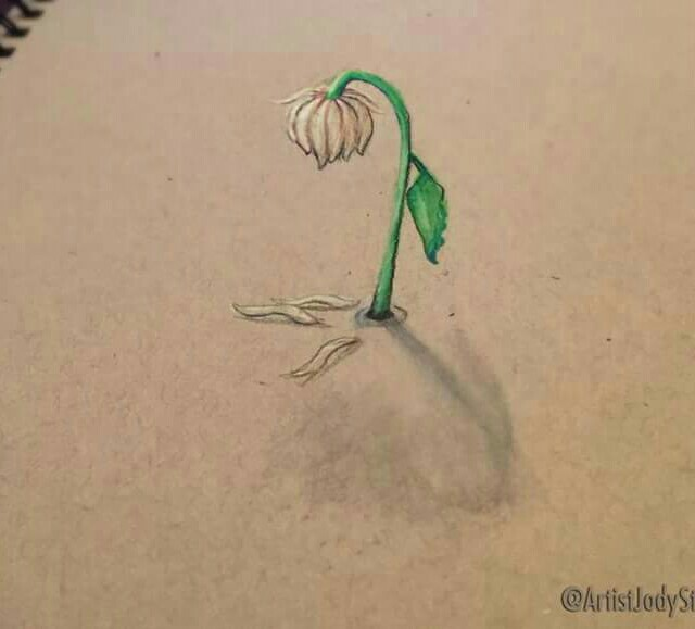 640x579 A Wilted Flower Illusion By Jody Steel Drawing 101