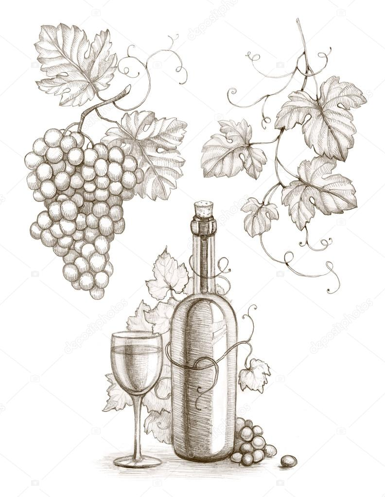 792x1023 Pencil Drawing Of Wine Bottle And Grape Stock Photo Sashsmir