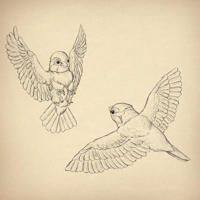 640x640 How To Draw Animals Birds, Their Anatomy And How To Draw Them