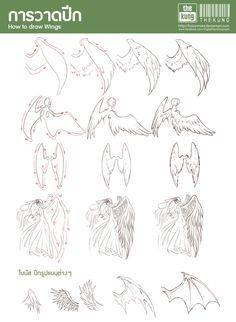 236x322 How To Draw Wing 02 Drawing Tutorial