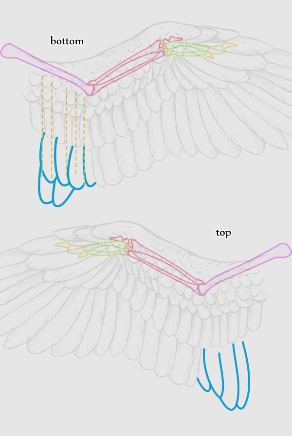 600x896 Taking Flight A Beginner's Guide Into Drawing Wings