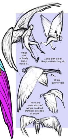 236x487 Wing Reference Art References Drawings, Babies