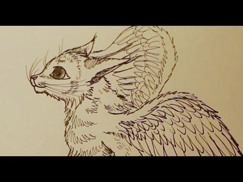 480x360 Winged Cat Drawing
