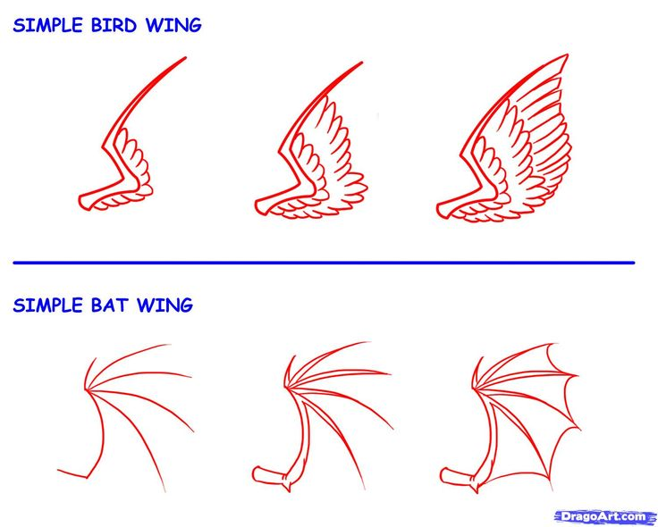 736x590 photos how to draw a wing