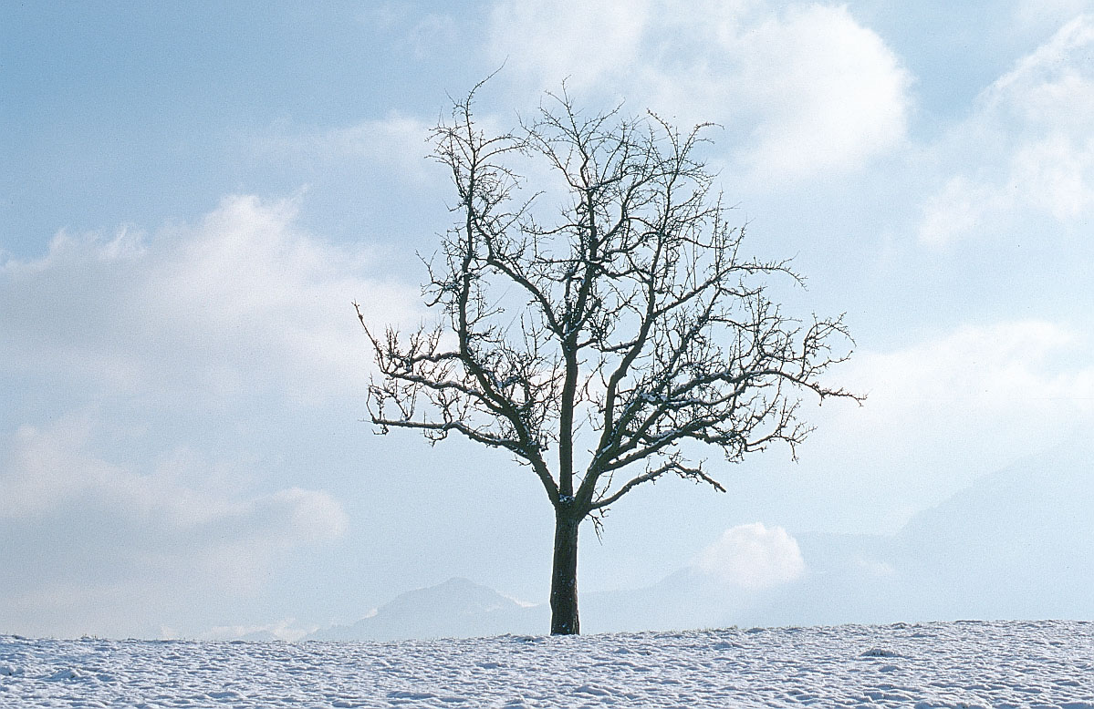1199x778 Cathy Spencer, Author Ode To A Winter Tree Drawing Refs Scenic
