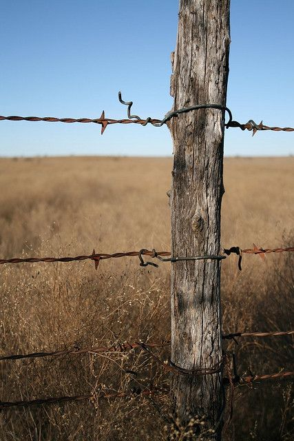 427x640 Barbed Wire Fence I'D Love To Draw This Diyampart Inspiration