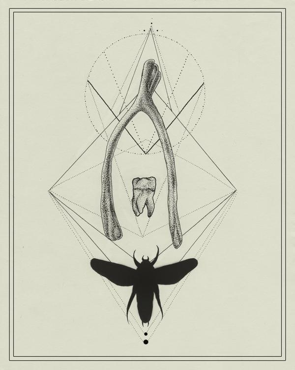 600x752 Wishbone Illustration