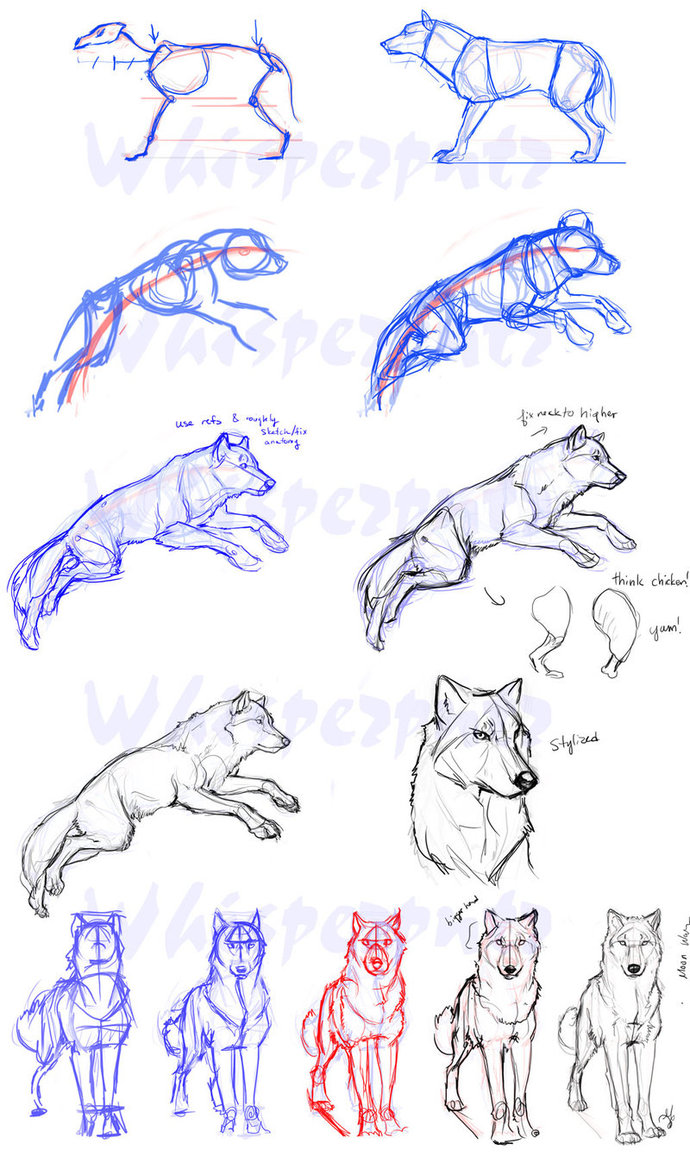 the best free lobo drawing images download from 27 free drawings of