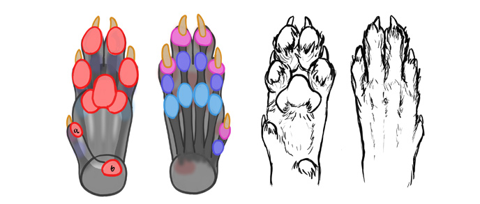688x293 How To Draw A Wolf Head And Shoulders, Knees And Paws