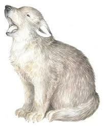 204x247 Image Result For Wolf Cub Drawing Tatto Wolf