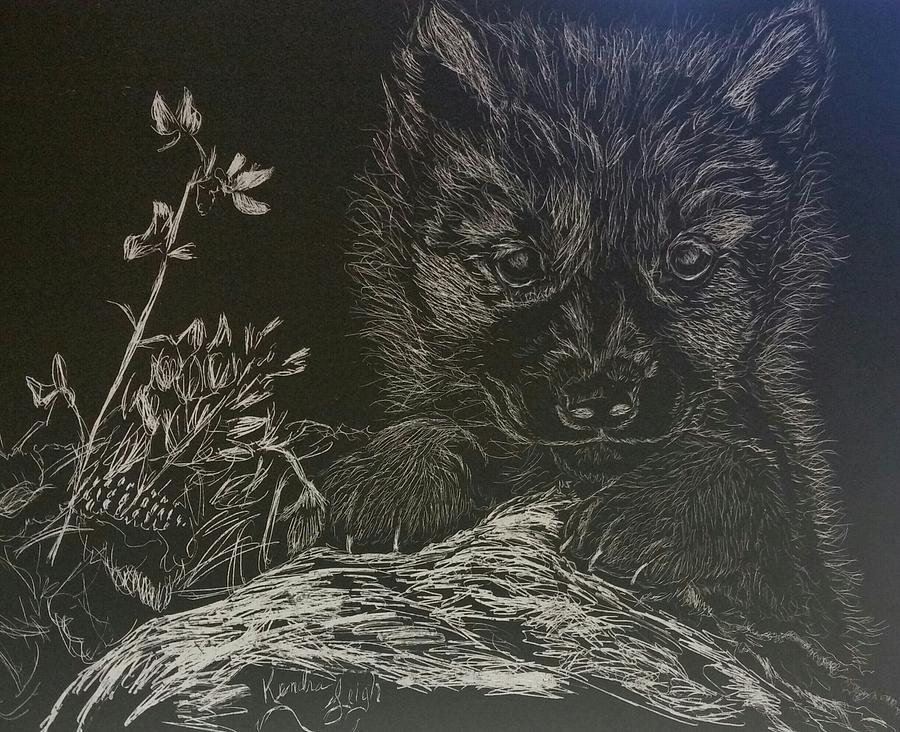 900x732 Wolf Cub Drawing By Kendra Deberry