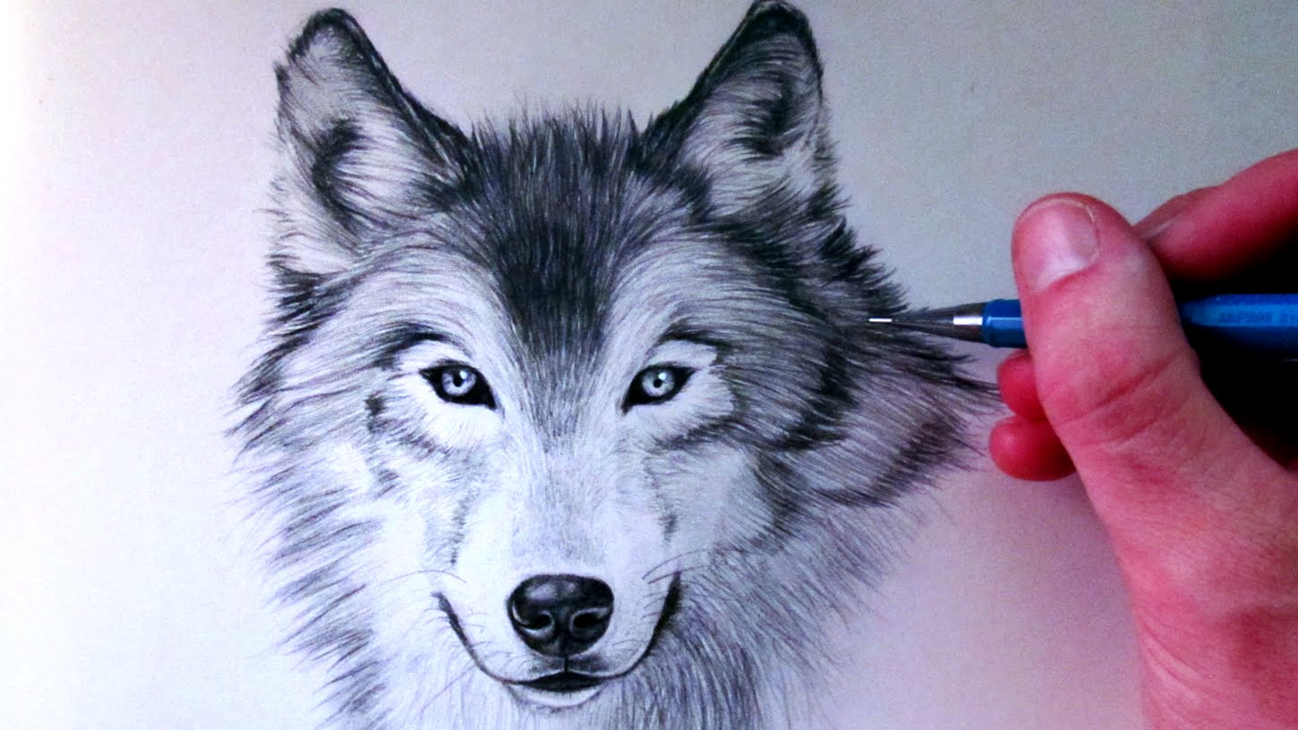 1450x816 How to Draw a Wolf