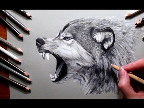 480x360 How to Draw a Wolf Pencil