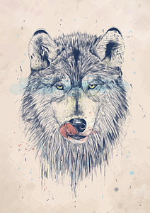 212x300 Wolf Drawings Fine Art America