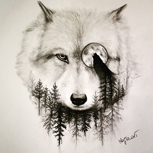 640x640 wolf drawing art pencil on Instagram a r t Pinterest Wolf