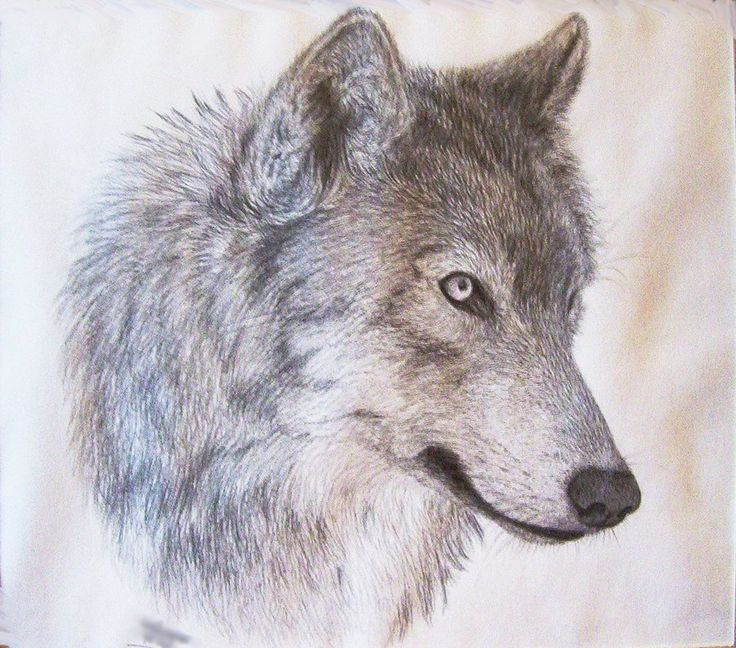 736x648 photos wolf head drawing