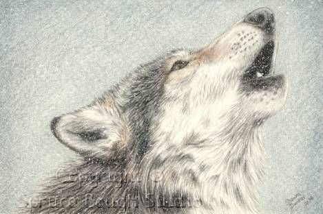 469x312 howling wolf colored pencil drawing 19 95 for 8x10 prin… flickr