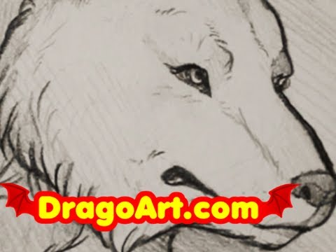 wolf drawing step by step pencil at getdrawings com free for