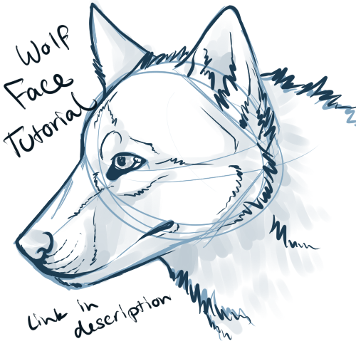 500x500 Wolf Face Drawing Tutorial Wolf Face Video Tutorial By Art