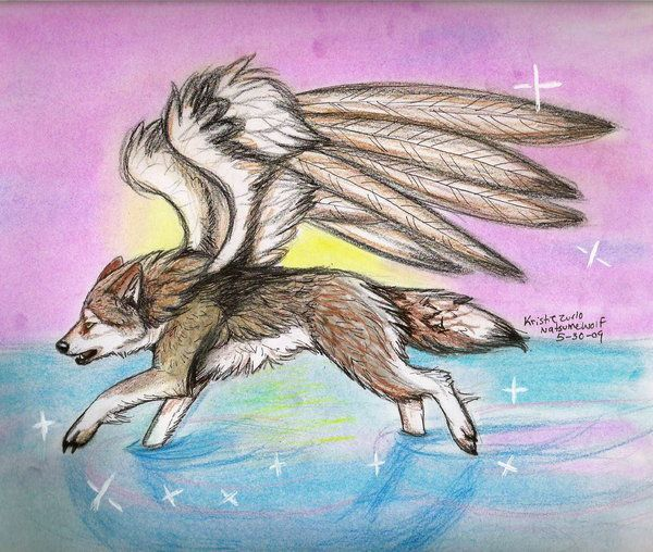 600x508 How To Draw Wolves With Wings Fragile Wings By Drawing