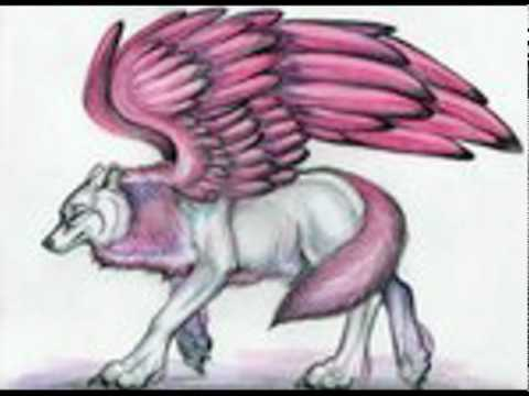 480x360 Wolves With Wings