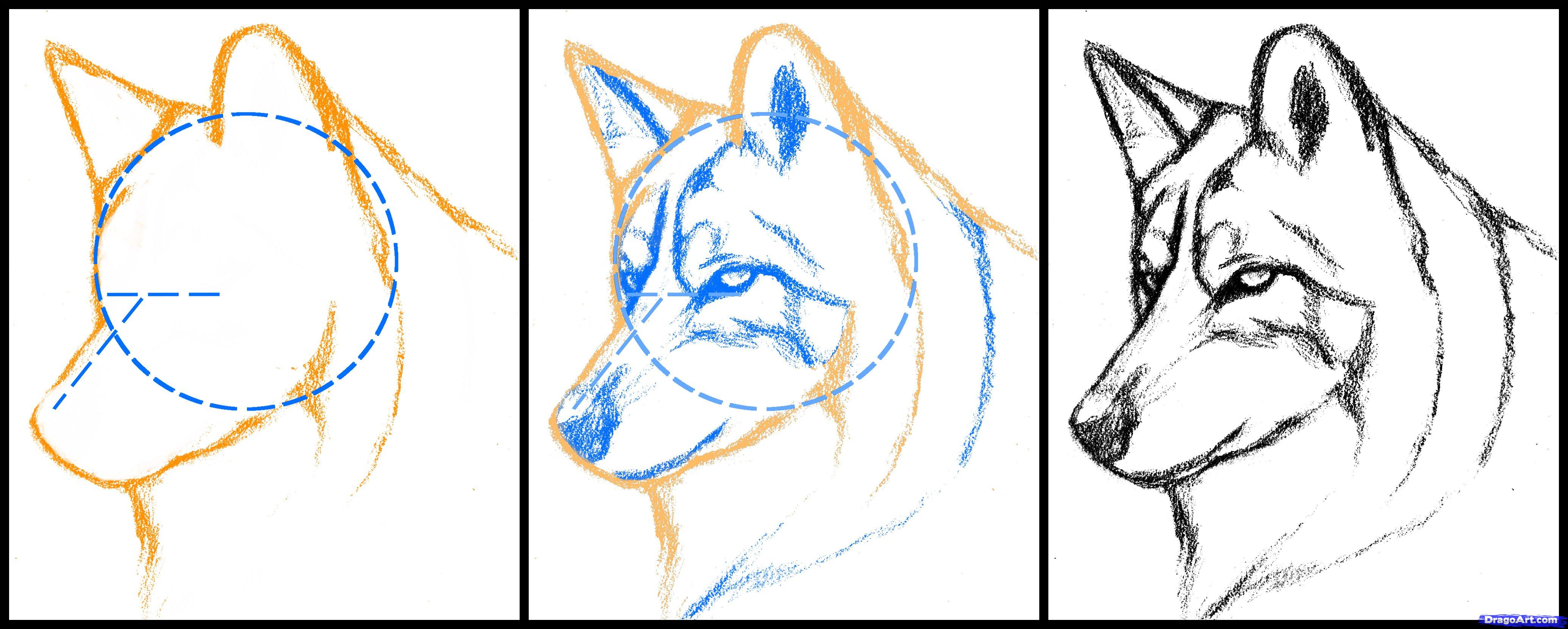 4140x1662 How To Draw A Wolf Head, Mexican Wolf, Step By Step, Forest