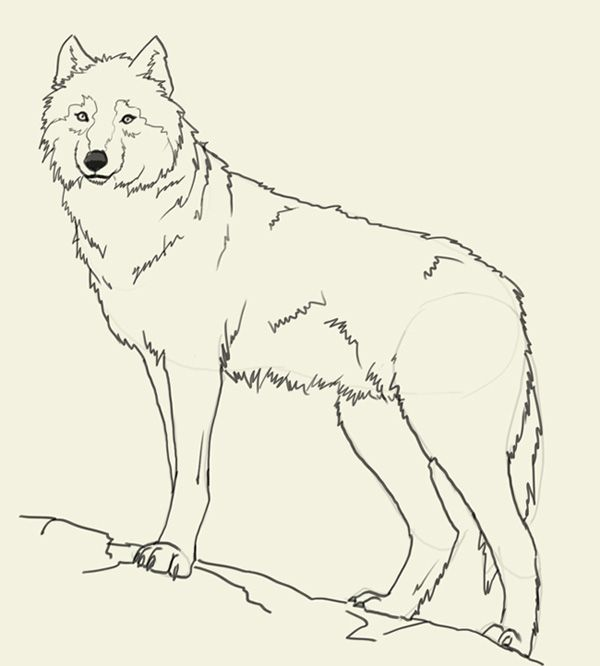 600x666 Wolf Easy To Draw 25 Trending Wolf Drawing Easy Ideas