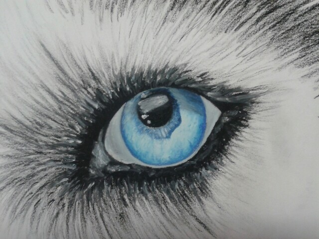 Wolf Eyes Drawing At Getdrawings Com Free For Personal Use Wolf