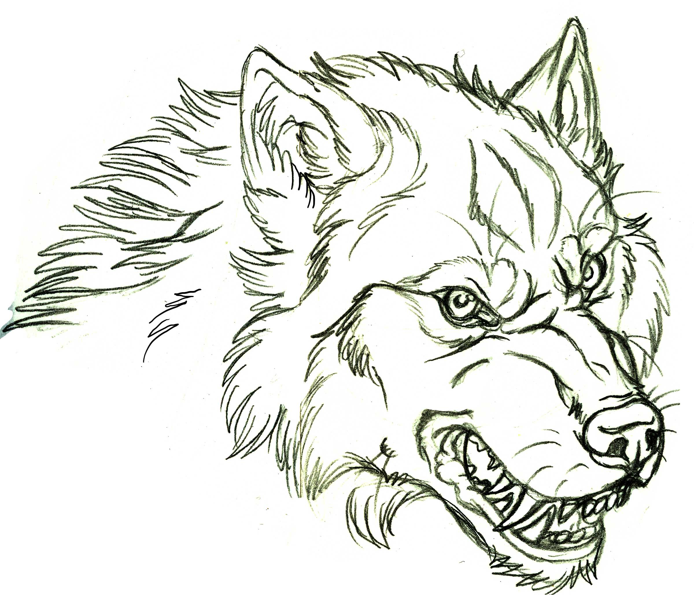 2400x2057 Angry Wolf Face Drawing