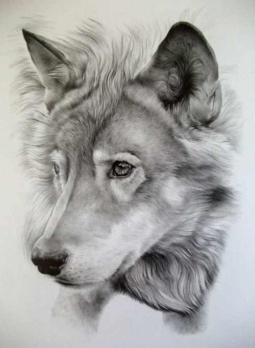 500x683 Pin By Jen Lohjelm On Draw Dog Animals Wolf