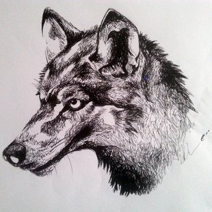 310x310 Dessin De Loup Dessin Wolf And Draw