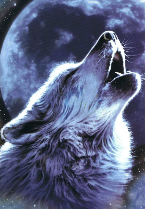488x700 Wolf Baying In Front Of A Full Moon Nathan's Guitar