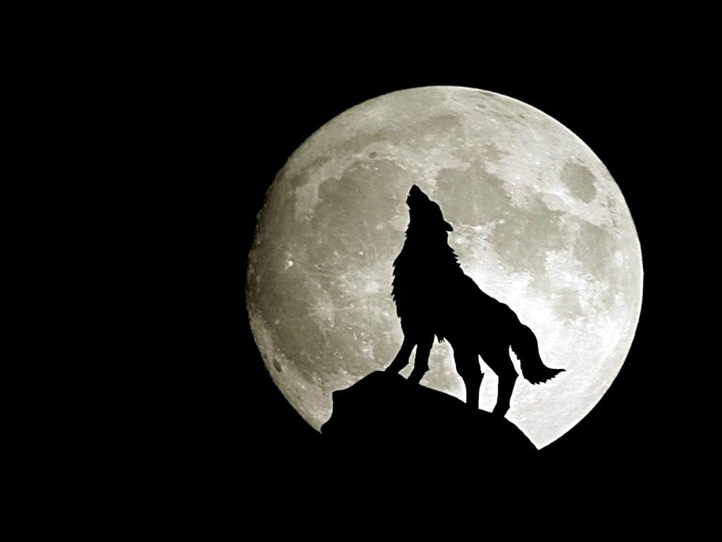 1024x768 Wolf Howling At Moon Drawing Wolf Full Moon Drawing Wallpaper