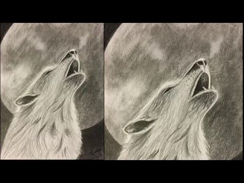 480x360 Wolf Howling