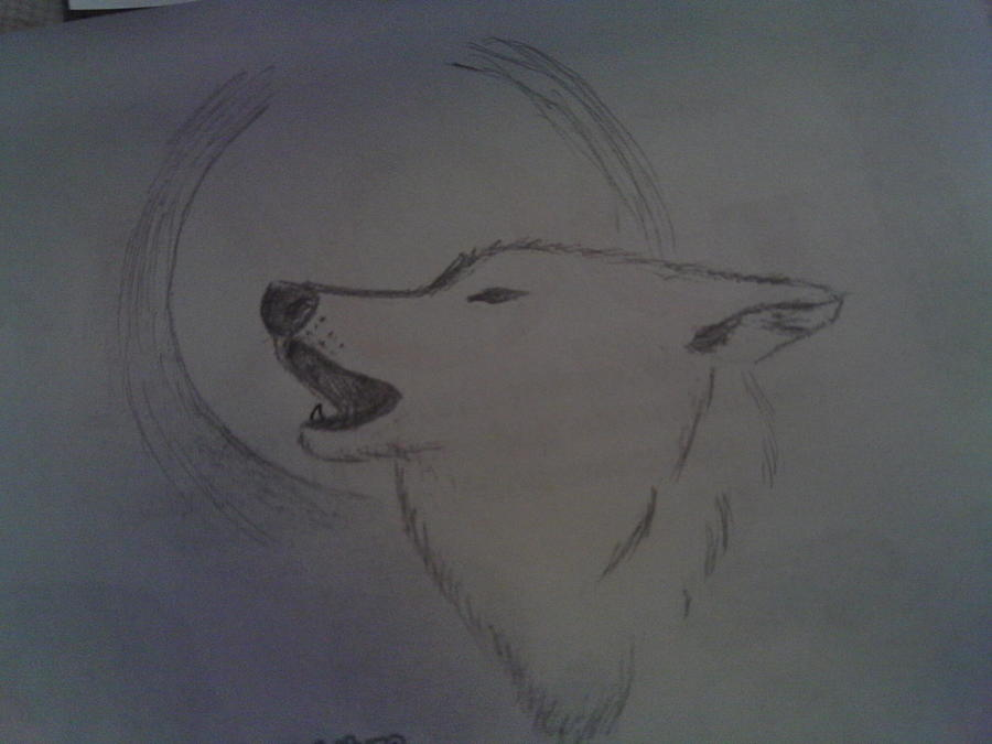 900x675 Wolf Howling Drawing By Bailey Reed
