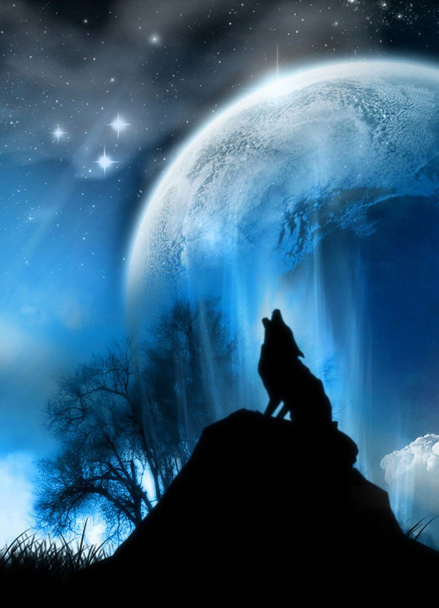 867x1200 Wolf Howling