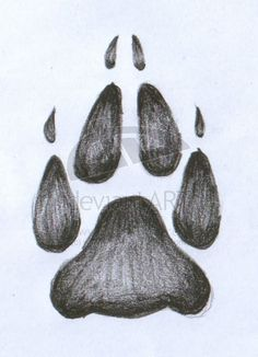 236x326 Wolf Paw Tattoos On Bear Paw Tattoos, Dog Paw Tattoos