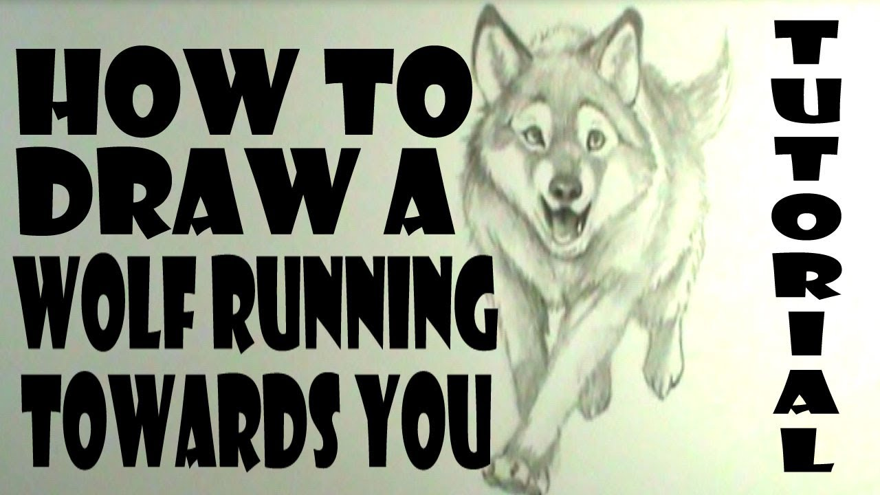 1280x720 How To Draw A Wolf Running Towards You