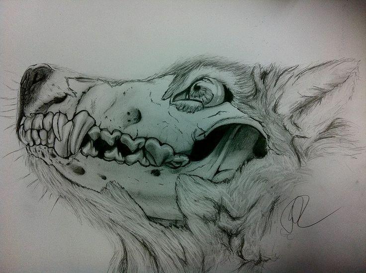 736x549 Wolf Skeleton drawing. Love it!