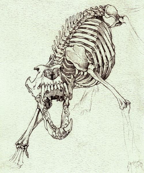 500x602 wolf skull