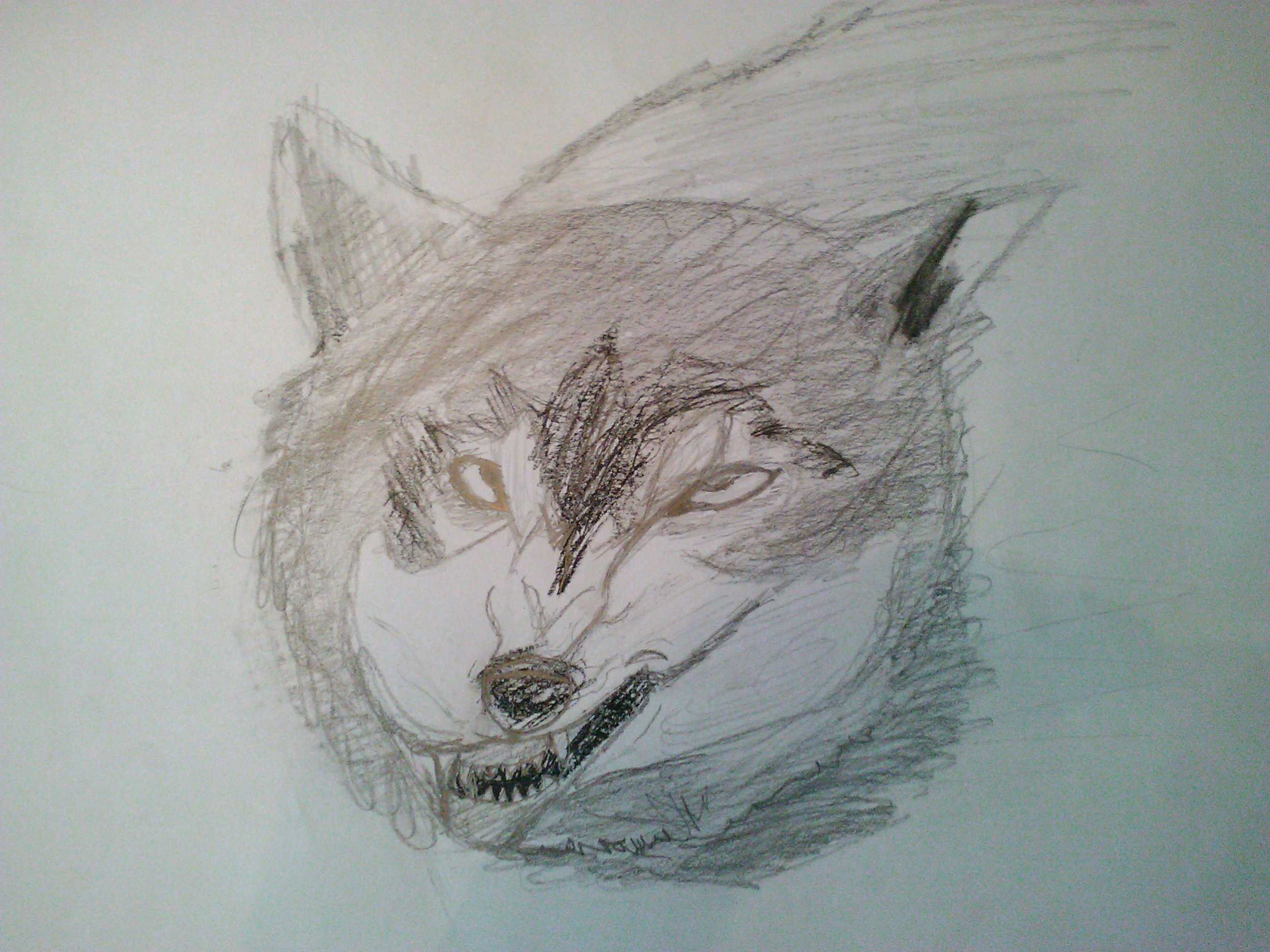 2592x1944 Snarling Wolf Drawing Growling Wolf Drawing