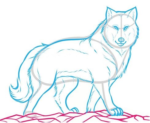 489x403 How To Draw A Wolf [Ferocious]