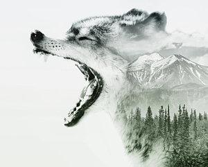 300x241 Wolf Teeth Art