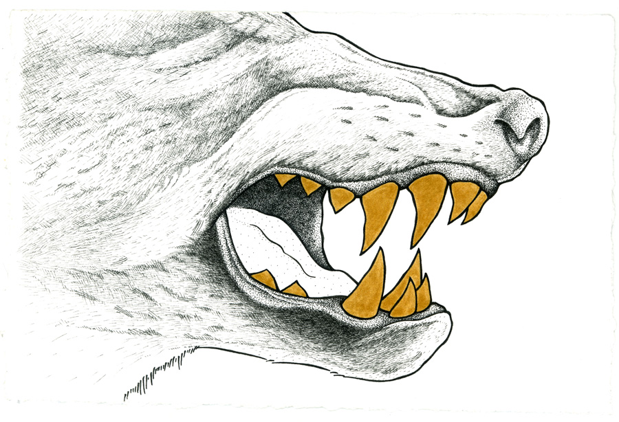900x614 Wolf