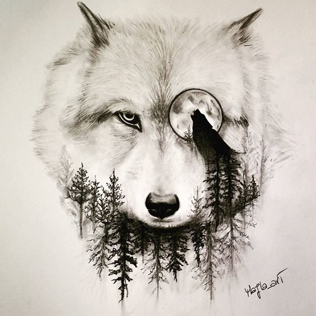 640x640 Wolf Drawing Art Pencil On Instagram A R T Wolf