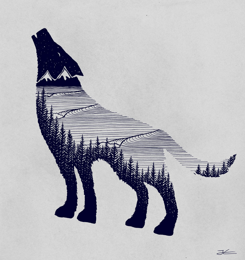 800x850 Wolf Drawing Jonas Claesson