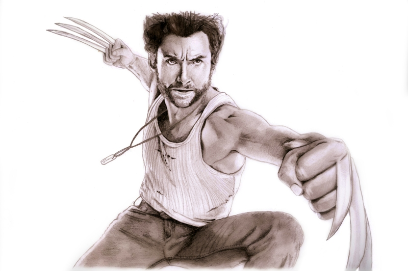 800x532 New Drawing Wolverine